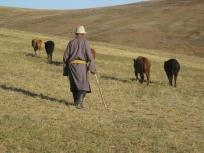 centro Mongolia paesaggio_pastore